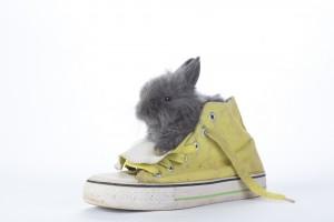 Bunnysshoe